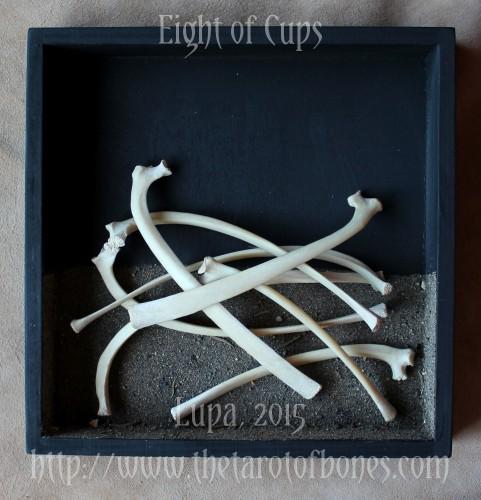 eightcups